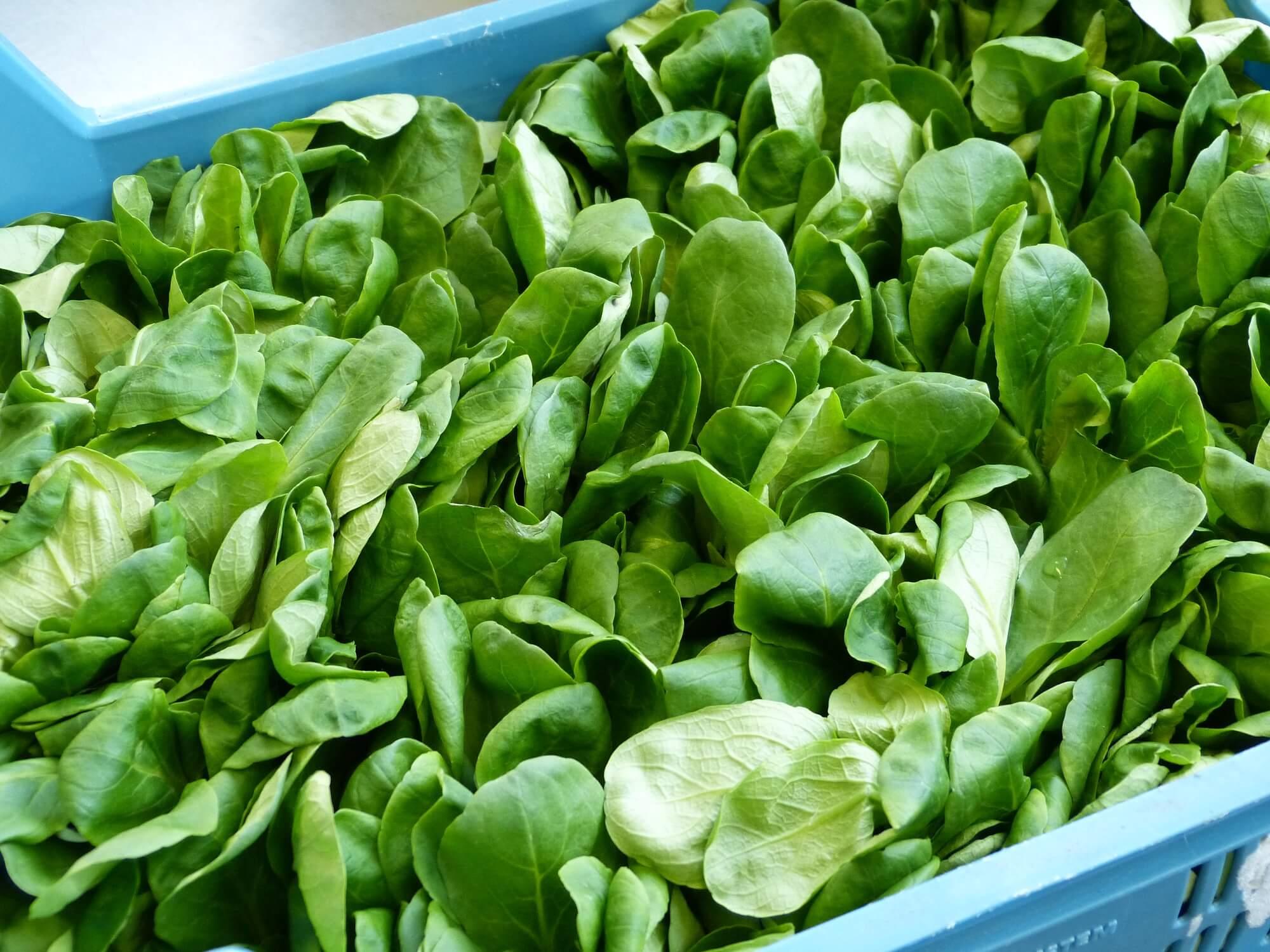 Feldsalat in einem blauen Korb