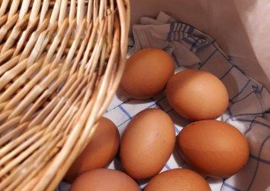 Eier direkt vom Bauernhof aus der Region!