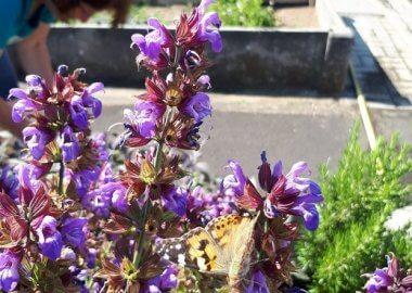 Für die Mensa: Erste Kräuter-Ernte im Botanischen Garten!